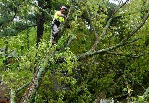 Picture of a our crew member on a tree doing a tree removal in Greenwood, IN.